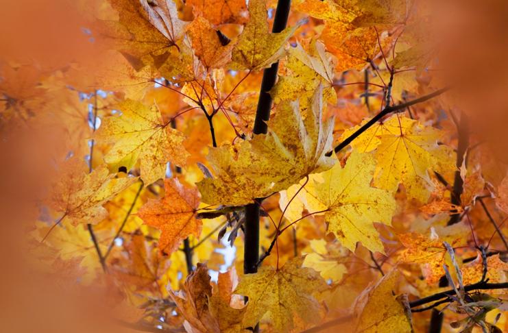 VI. Podzimní radovánky
