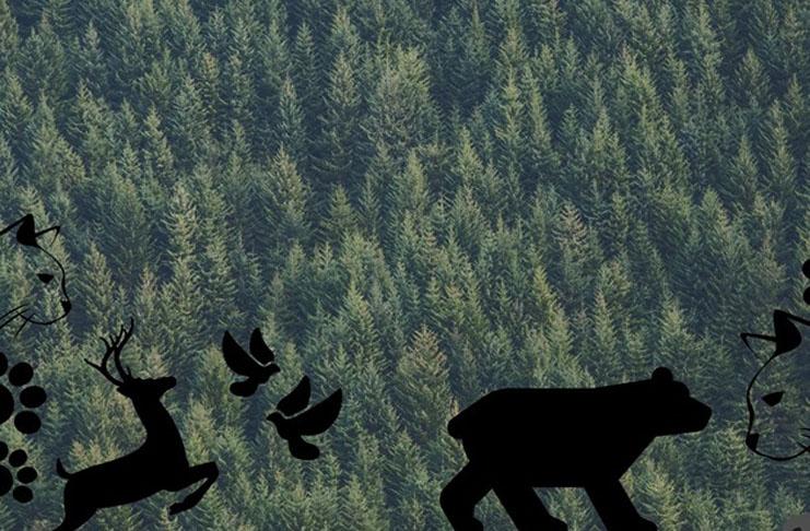 V každém lese je myš (která hraje na housle)